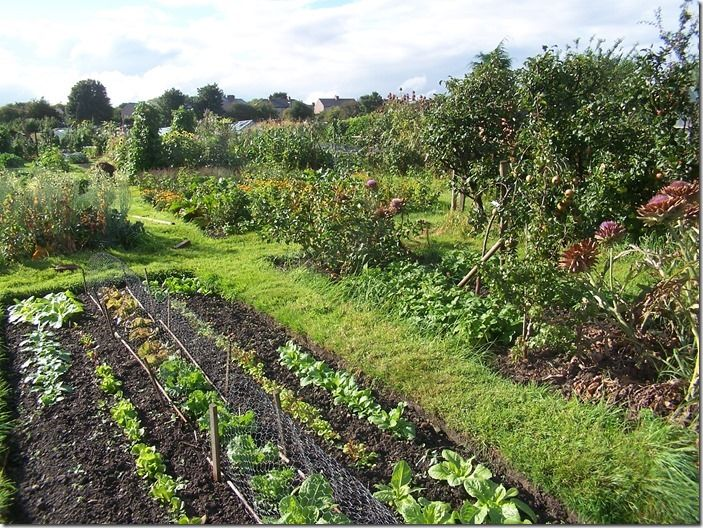 2 Nice allotments