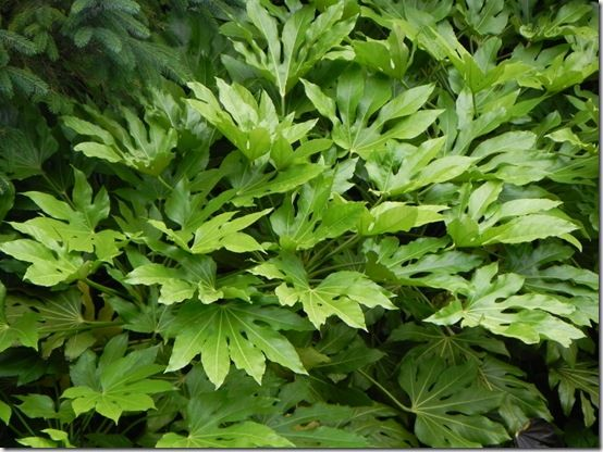 Best Plants For Foliage Gardening Learning With Experts