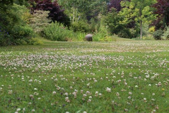 6 Clover Lawn (1024x683)
