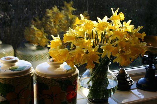 4.+Vase+of+daffodils+4