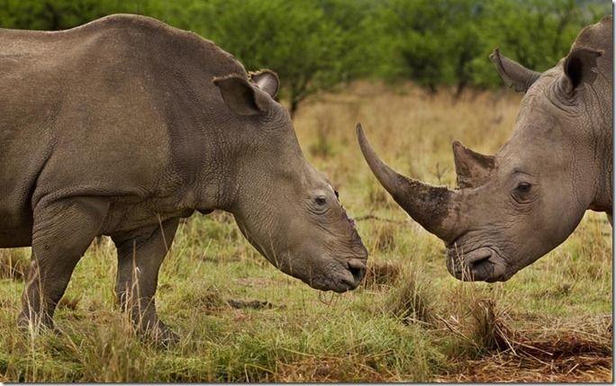environment-rhino_2371836k