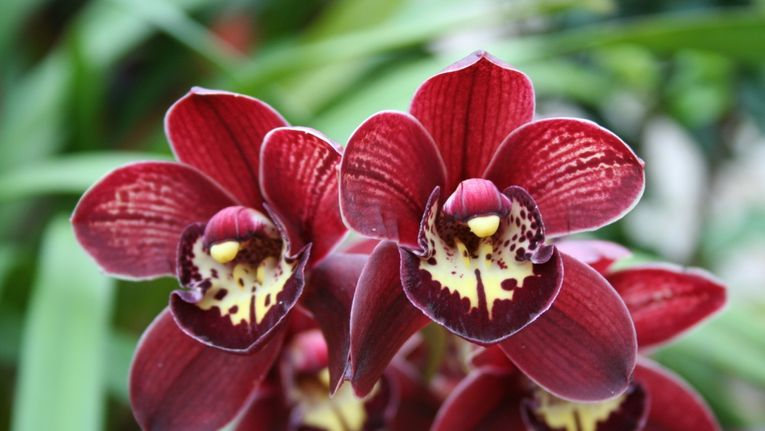 How To Get An Orchid To Rebloom Gardening Learning With Experts