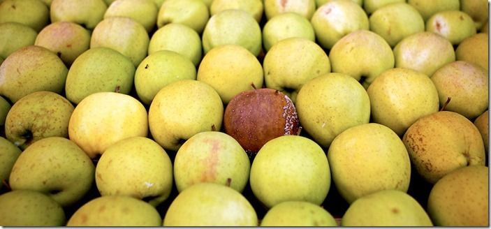 7 Rotten apple