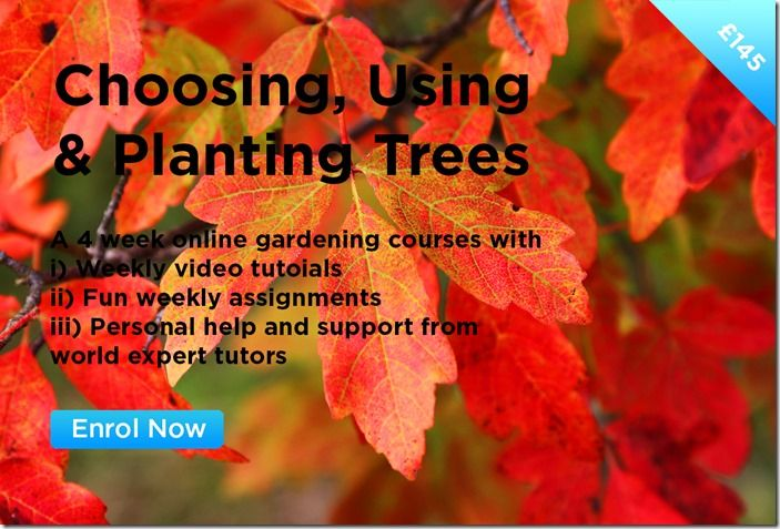 Choosing, Using & Planting Trees