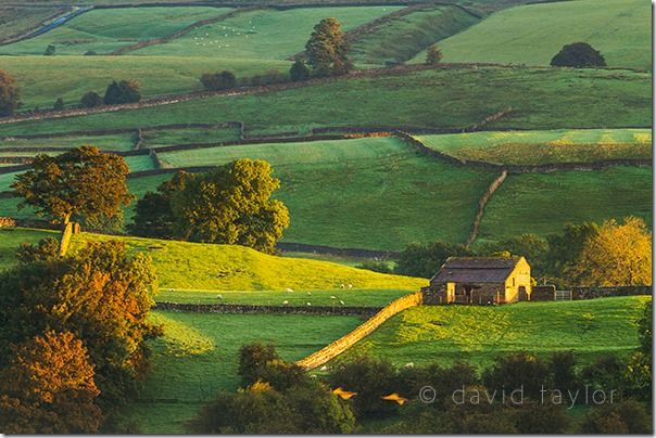 Morning light on the dry-stone walls and barns near Askrigg in Wensleydale, Yorkshire Dales National Park, England,  The Golden Hour, landscape photographer, landscape photography, Light, sunrise, sunset, visible light, online photography course