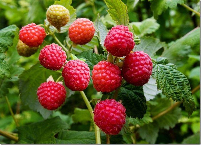 2 Raspberries