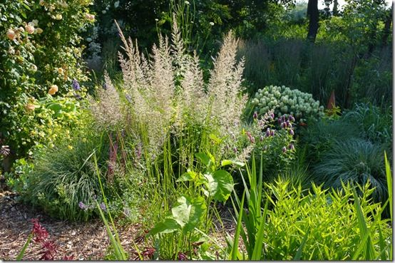 Using grasses in planting