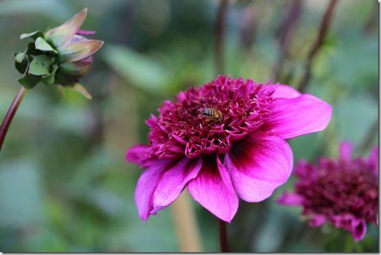 Anemone form