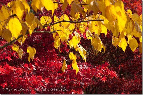 Autumn Home00004