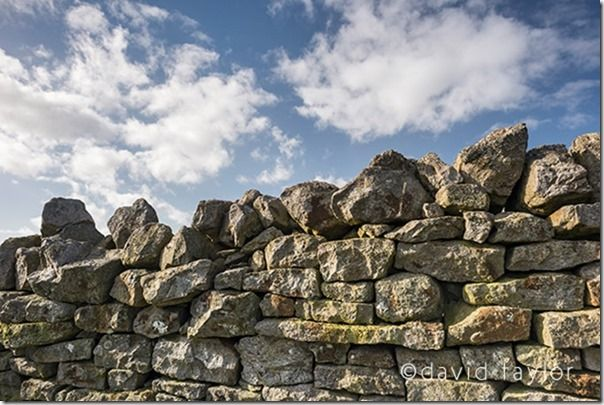 Dry-stone wall in a farm field near the village of Allendale, Northumberland, England
