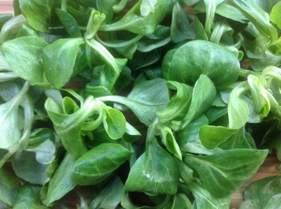 8 Lamb's lettuce