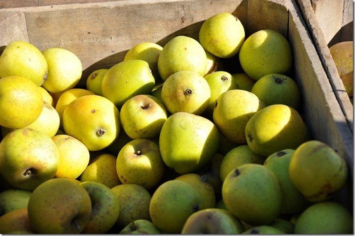 8 Reinette Ananas (1280x850)