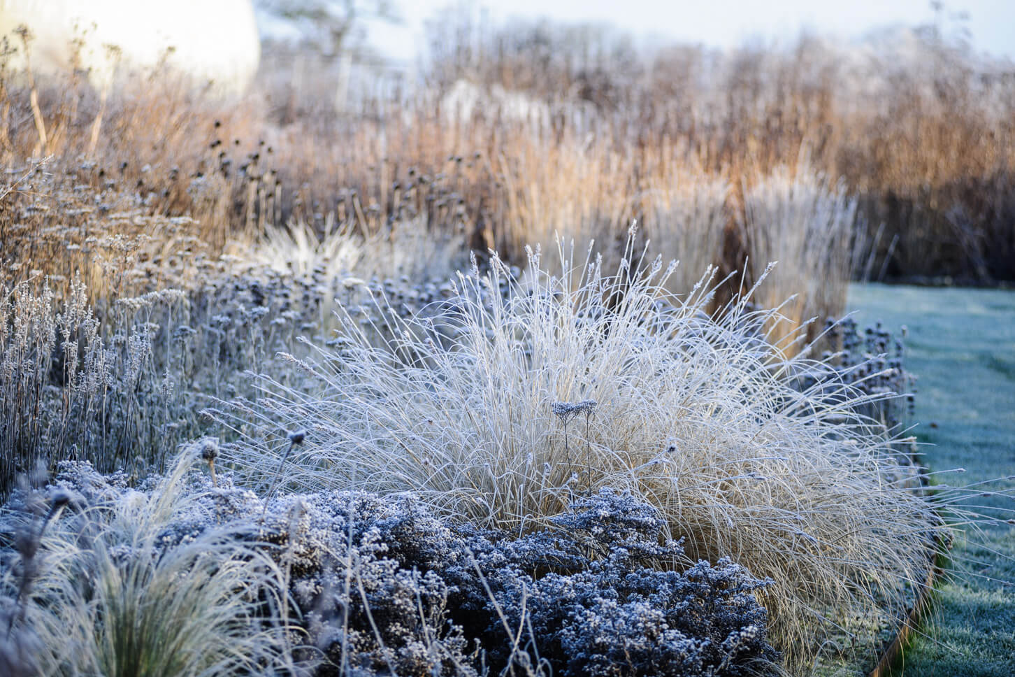 Backlit grass and seedheads combination planting in winter