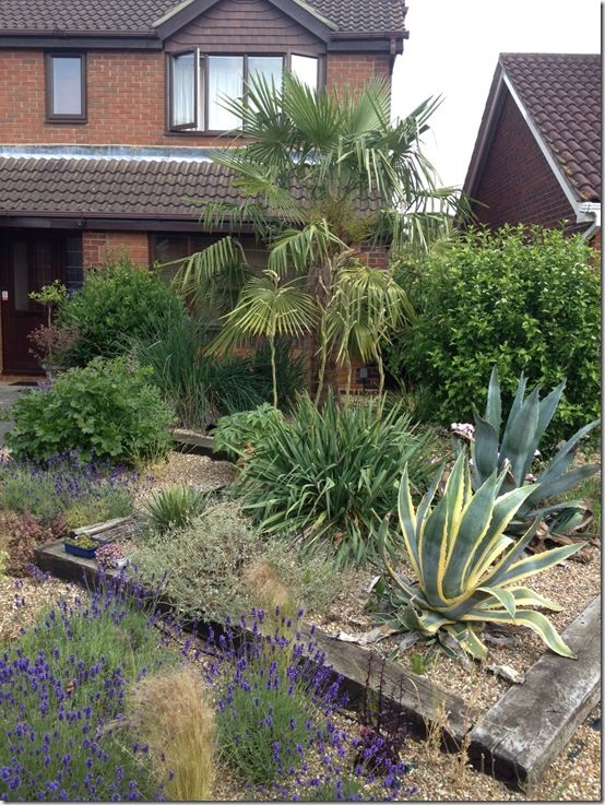 a touch of the Med in a front garden