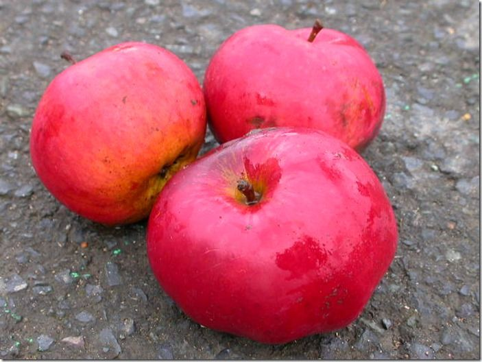 3 Apple Devonshire Quarrenden