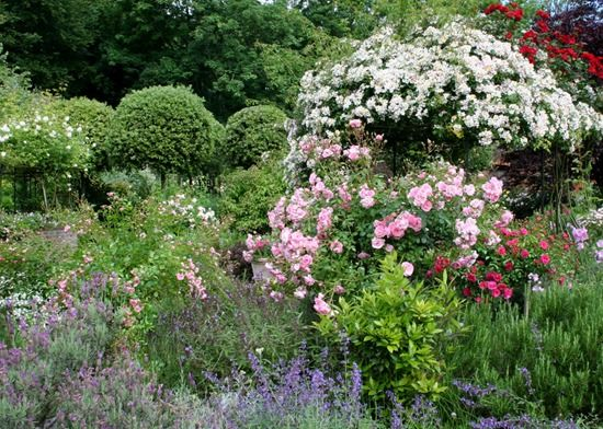 4 Roses, shrubs and perennials need slow release feed