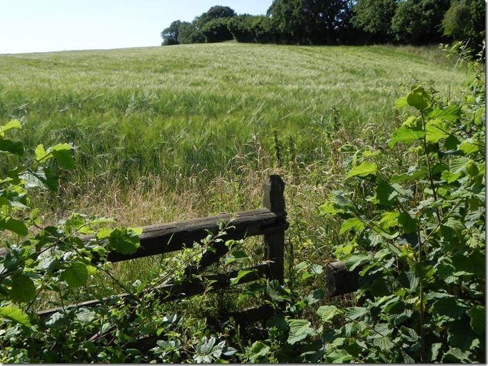 4 Farmland (1024x768)