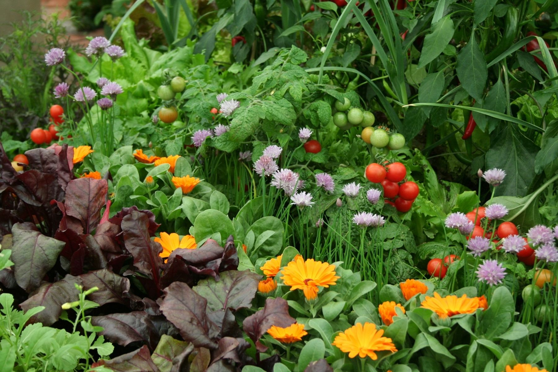 Companion planting how to deter pests and encourage beneficial insects gardening Flowers to plant in vegetable garden