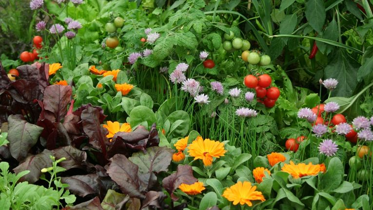 Companion Planting: How To Deter Pests and Encourage Beneficial ...