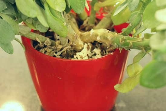 How To Control Fungus Gnats On House Plants - Gardening