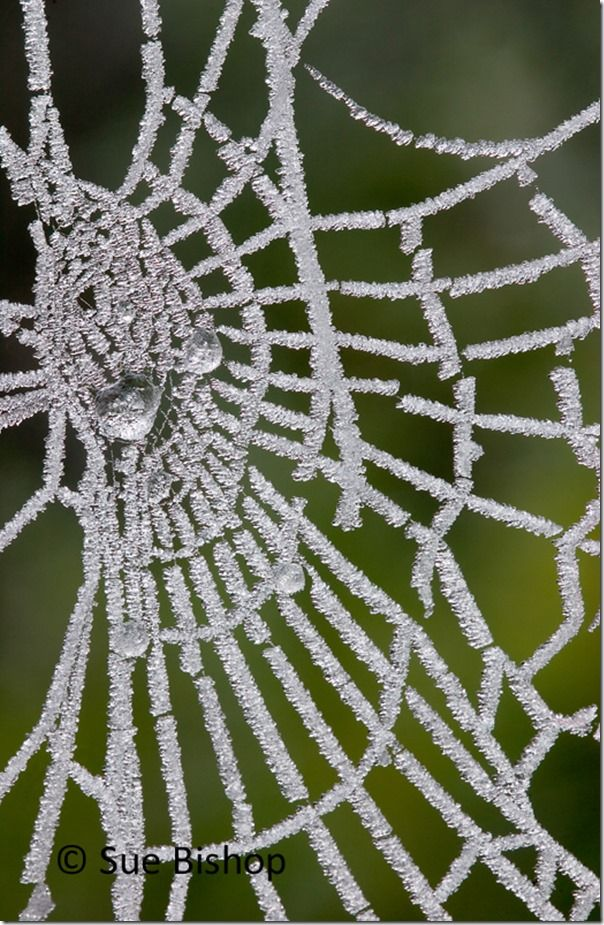 spiders web with frost