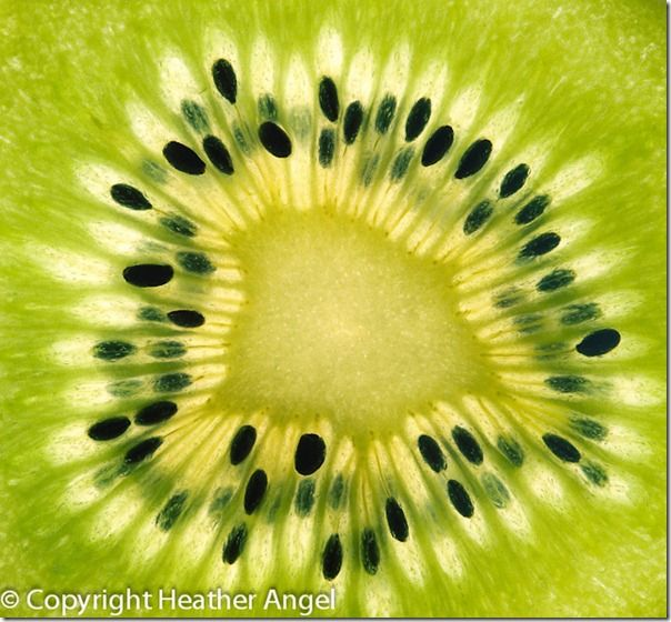 Backlit slice of kiwi fruit on lightbox