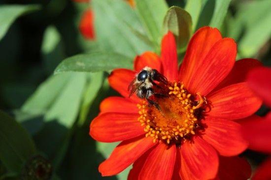 9 Bee friendly