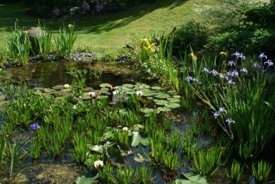 2 The pond  (800x536)