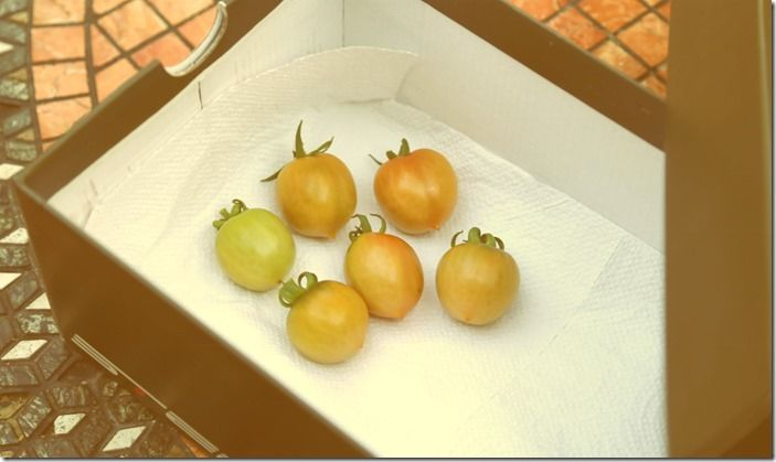 3 Ripening tomatoes in a box