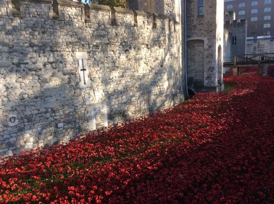 8 A river of poppies in the moat