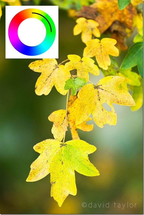 colourwheel, Color, Colour, wheel, theory, Photography, colourwheel color theory, color photography, Colour photography, complimentary color, Colour Harmonies, Color Harmonies,