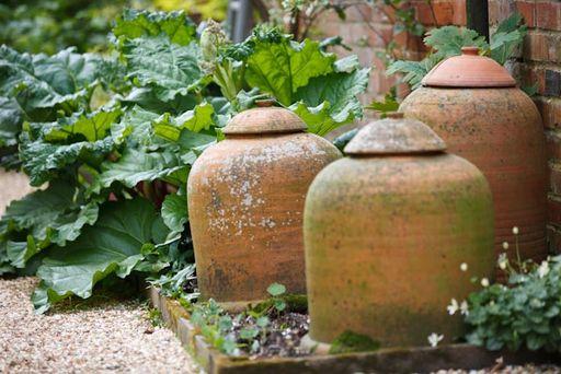 Kitchen Gardening, Vegetable Gardening & How to Grow Vegetables