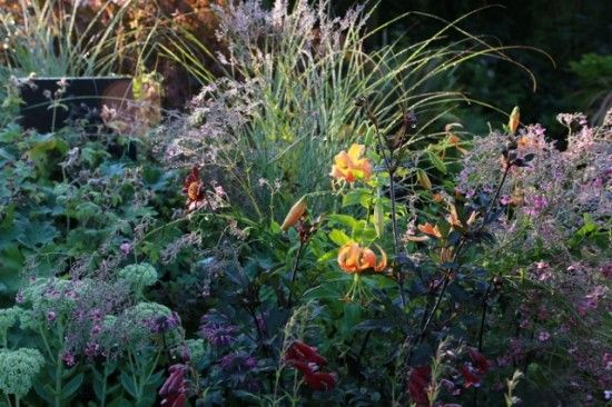 5 Late summer planting (640x427)