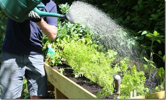5 Watering with a liquid fertiliser