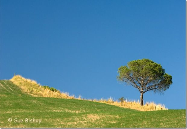 single tree, tuscany