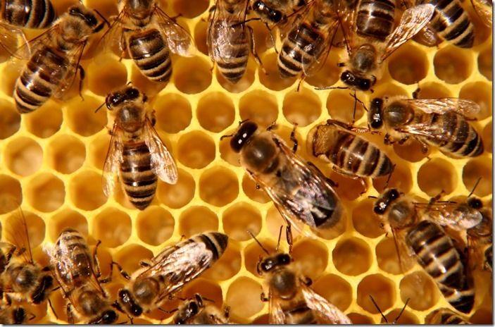 3 Honey-bees