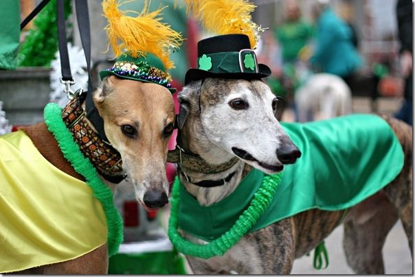 How to Photograph St Patrick's Day