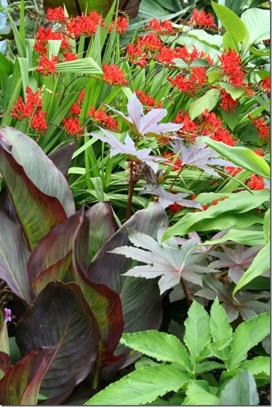 Canna, ricinus and crocosmias