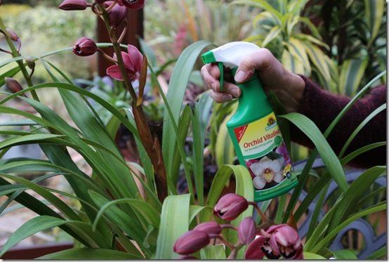 Orchid Vitaliser6