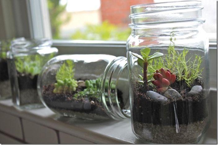 4 Bottle gardens assorted