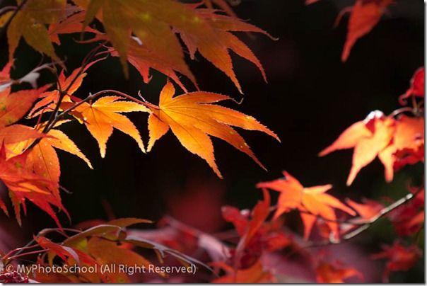 Autumn Home00017