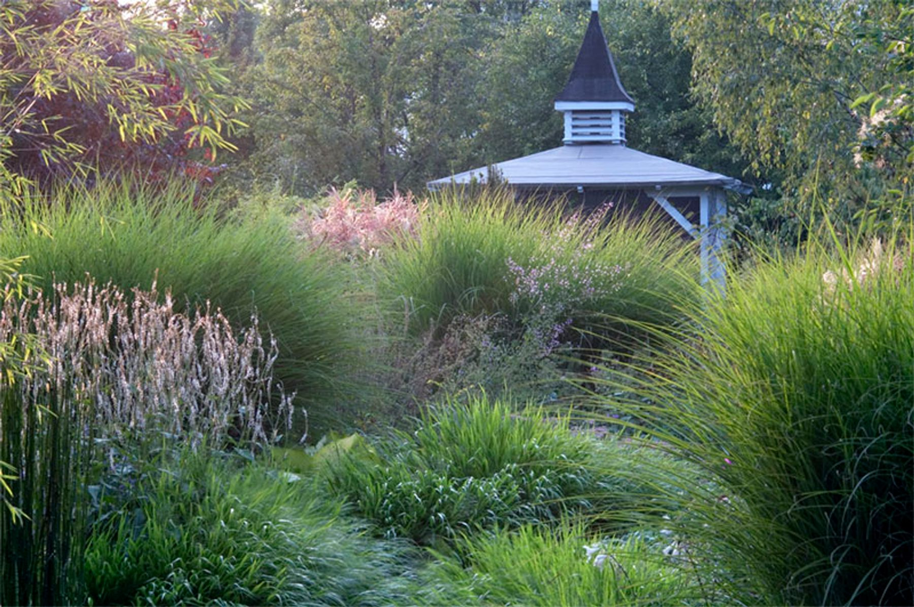 Exceptionnel Garden Ideas: Designing With Ornamental Grasses
