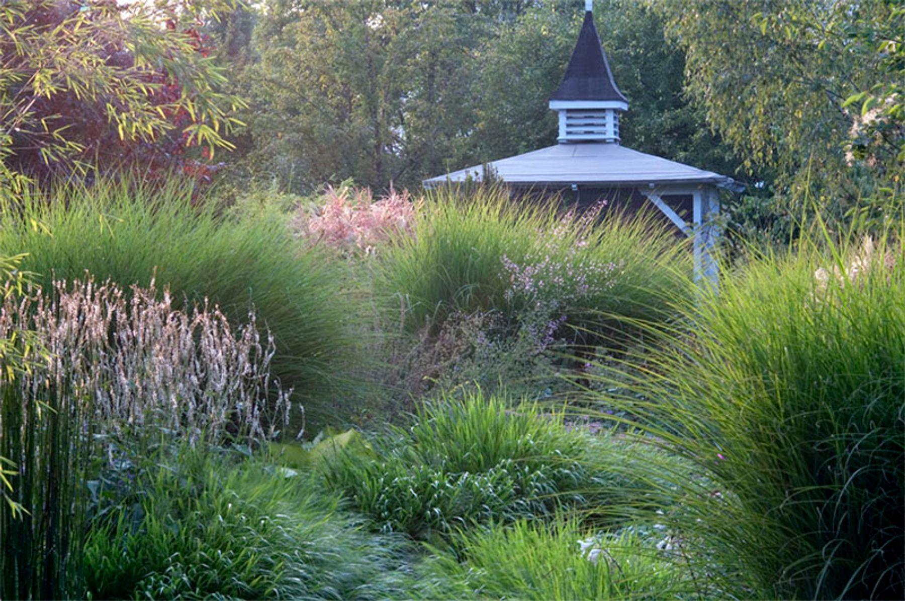 Superbe Garden Ideas: Designing With Ornamental Grasses