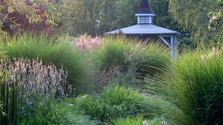 Garden Ideas Designing With Ornamental Grasses Gardening
