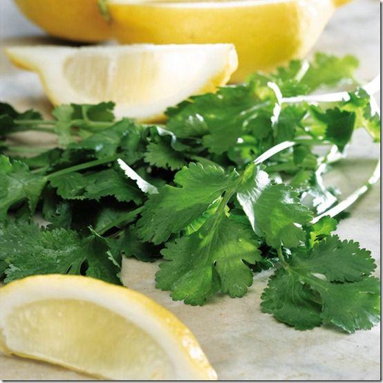 165079_Herbs_Lemon_Coriander_exp