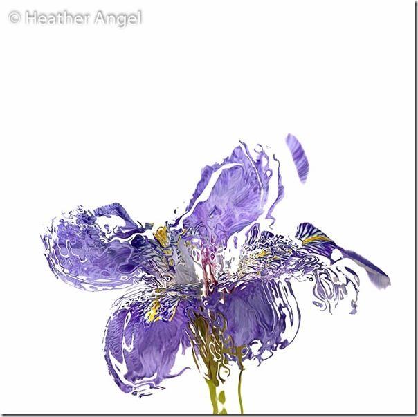 Heather Angel's macro Photography Course