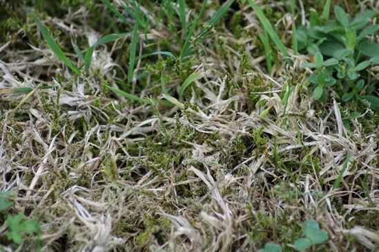 4 Moss, thatch and weeds