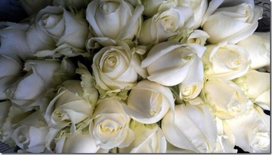 White Roses on Pinterest