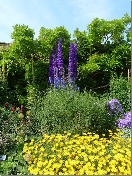 Waterperry-Delphinium