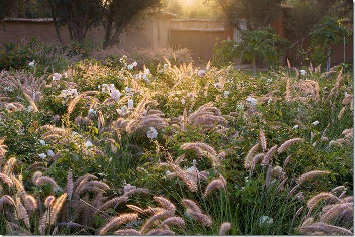 Garden in Taroudant